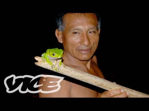 TRIPPING - VICE heads to the Amazon on a hunt for its most hallucinogenic tree frogs. In part 2, federal agents, monster bugs, and an inept shaman keep getting in the w...