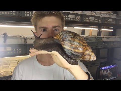 Guy Showing Off One Of The Largest Species Of Terrestrial