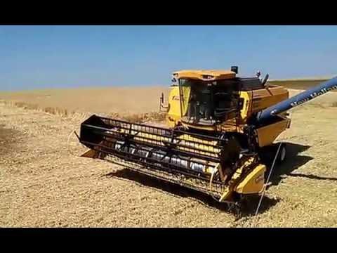 colheita trigo realeza parana parte 2