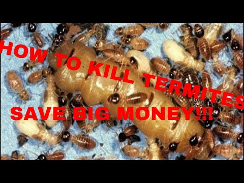 How to Kill Termites Do it Yourself and SAVE BIG MONEY!!!