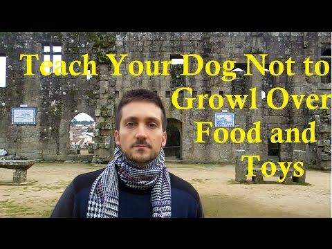 Teach Your Dog Not To Growl Over Food And Toys - Dog Training Nibbles Ep9