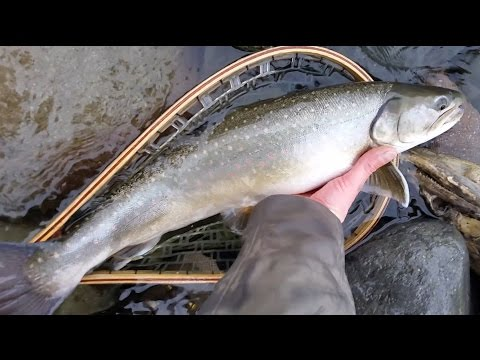 Winter fly fishing in Squamish British Columbia Canada