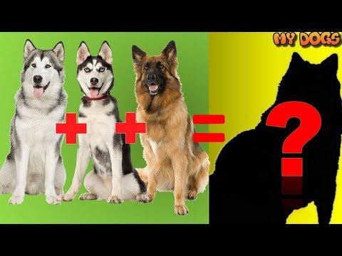 20 Unbelievable CUTE CROSS breed DOGs PT.1[HD]★2018