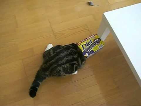 il gatto con cui tutti vorrebbero giocare!