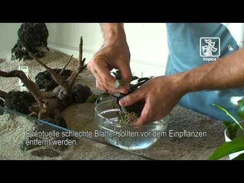 Tips und Tricks zur Handhabung der Pflanzen im Aquarium
