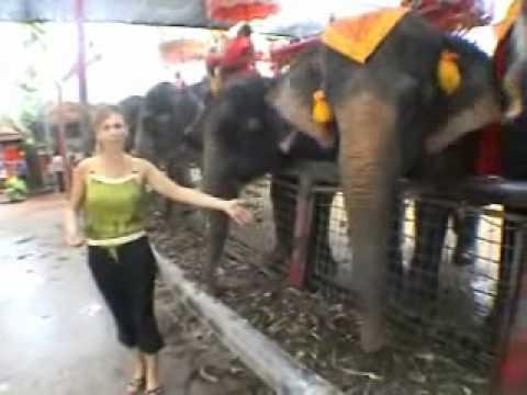 marilù spaventata dagli elefanti in thailandia