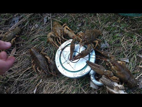 Ловушка для медведки своими руками видео