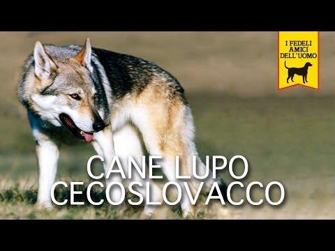 cane lupo cecoslovaccoo trailer documentario