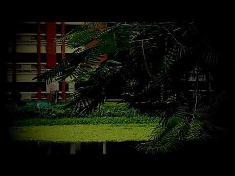 Video beauty of sirajgonj govt. college download in MP3, 3GP, MP4, WEBM, AVI, FLV January 2017