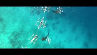 Oslob Philippines  city photos : Whale Shark Watching in Oslob Philippines w/ DJI Phantom 4 Drone