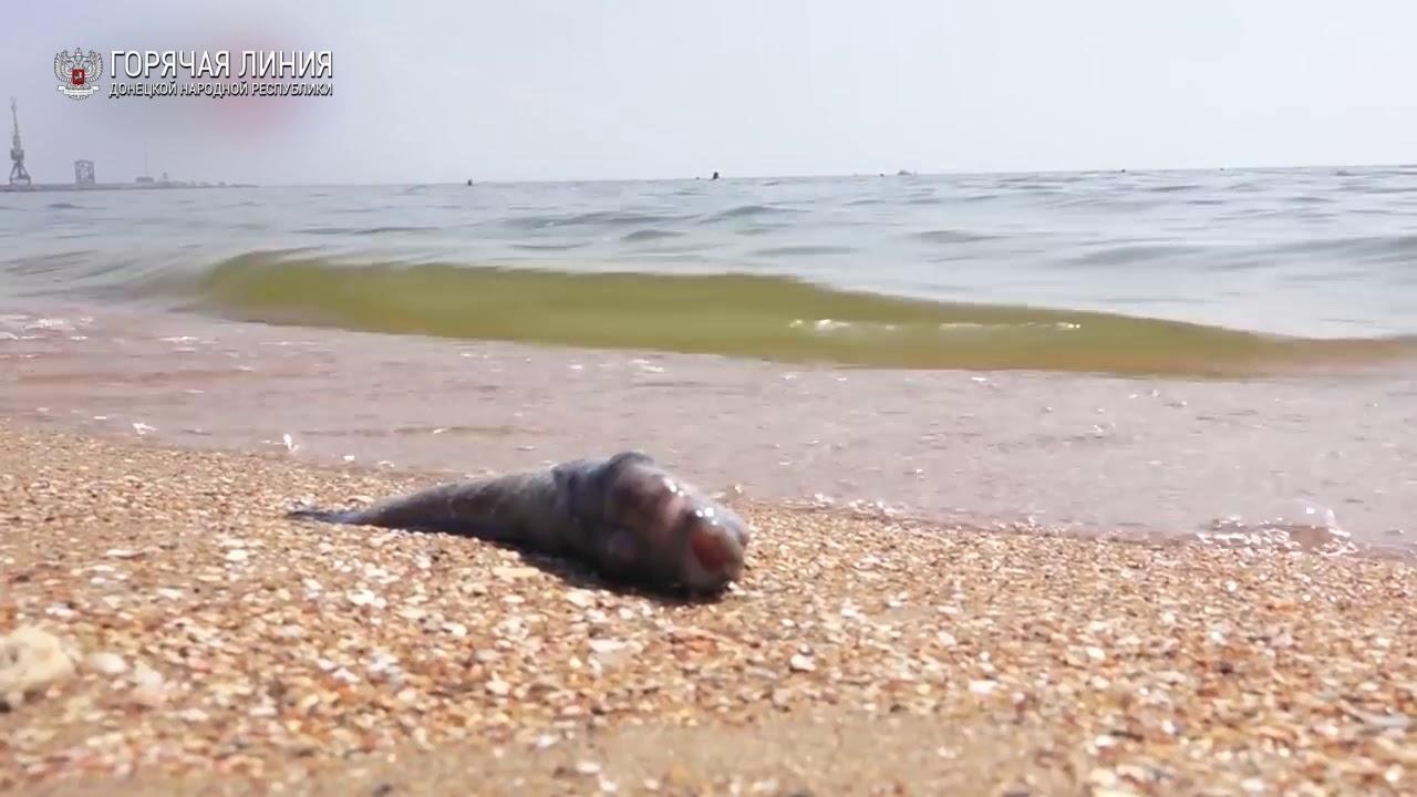 Массовый мор рыбы в Мариуполе — берег Азовского моря завален тухлятиной