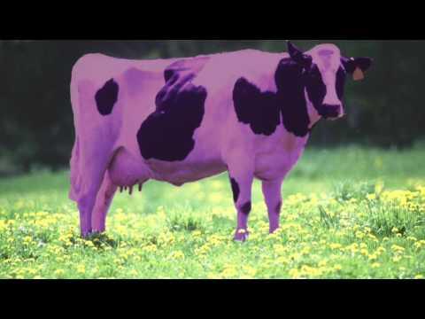 Swedish Techno -~- Purple Cow Geico Ad (видео)