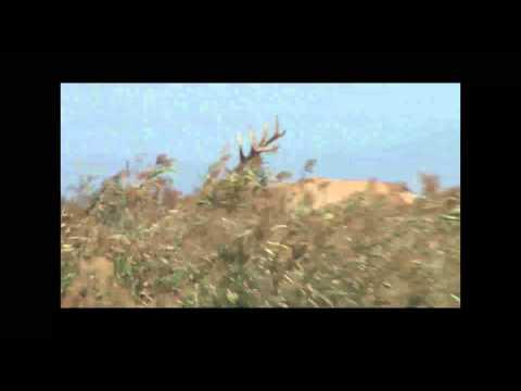 Tule Elk Hunt at Grizzly Island, CA