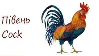 Півень, як намалювати півня. #draw, малюємо півня олівцем Пі́вень — самець курки; в загальному сенсі, самці всіх птахів сімейства куроподібних. Зовні від кур...