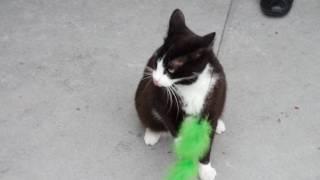 Une vidéo souvenir de Gigi, adoptée le 18 février 2017