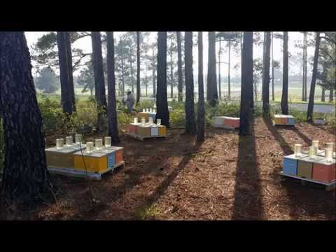American Honey Bee Farmer – Youtube Version