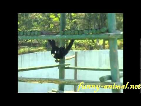 monkey-playing-monkey-bar