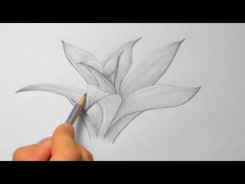 Bromelie, zeichnen im Zeitraffer (Bromeliad, drawing in fast motion)[HD]
