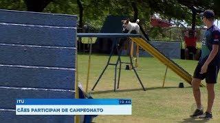 Itu recebe atletas de 13 países para campeonato de agility
