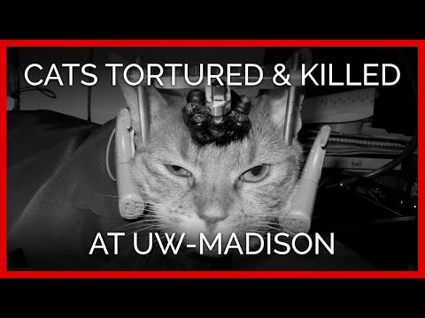 animal experimentation is bad science Animal experimentation a difficult issue in 1997 dr jay vacanti and his team grew an ear on the back of a mouse animal experiments are widely used to develop new medicines and to test the safety of other products.