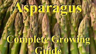 How To Grow Asparagus - Complete Growing Guide