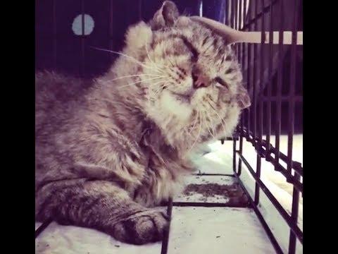 gatto-selvatico-dopo-10-anni-per-la-strada-viene-salvato-dalla-morte-e-inizia-una-nuova-vita