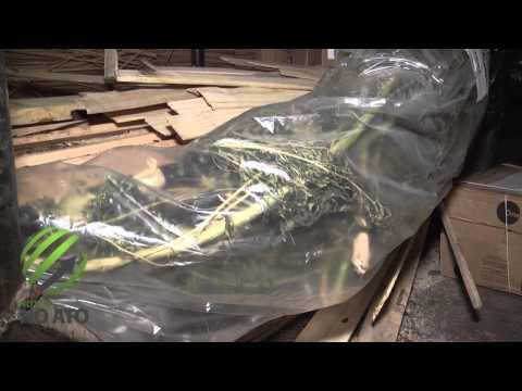 Mais de 377 quilos de drogas apreendidas são incineradas em Lages