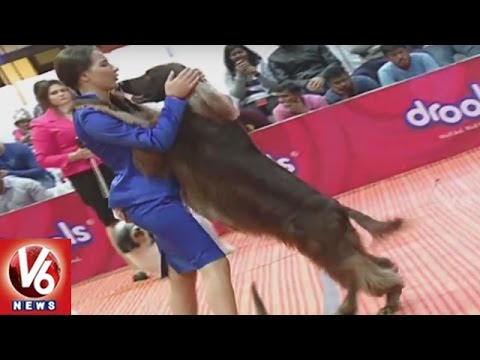 Petex-Expo-2016-Ends-Different-Breeds-OF-Dogs-Attracts-People-Hyderabad-V6-News