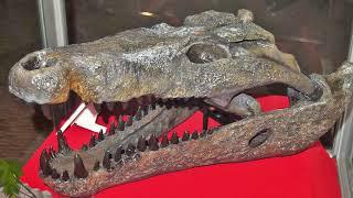 Mega-Beasts That Ruled Prehistoric Australia by Epic Wildlife