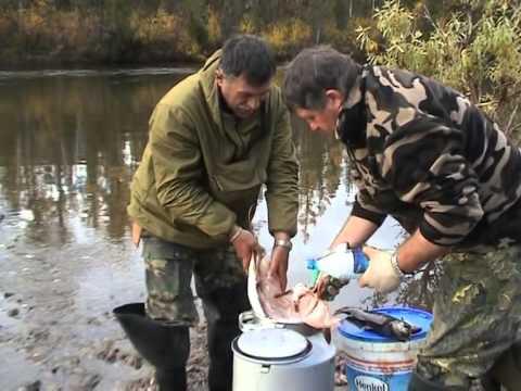 абакан рыбалка в октябре