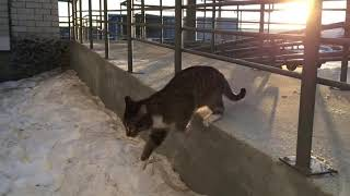 Кот домой пришел  Часть 2