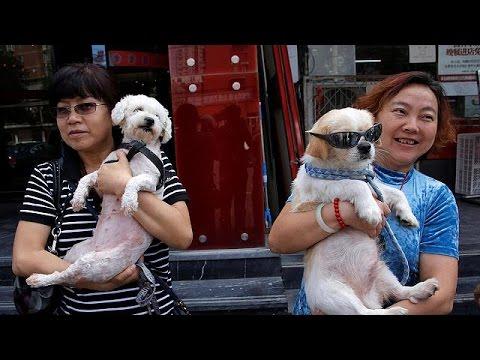 Πεκίνο: Ακτιβιστές ζητούν την κατάργηση φεστιβάλ αφιερωμένου στην κρεατοφαγία σκύλων