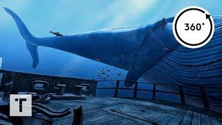Video the Blu: Whale Encounter | 3D 360 VR MP3, 3GP, MP4, WEBM, AVI, FLV September 2019