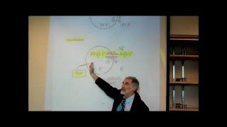 MEMBRANE POTENTIAL&THE ROLE OF POTASSIUM; PART 1 By Professor Fink