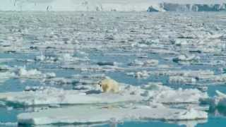 Nonton To The Arctic 2012 Imax 3 3  Exclusive  Film Subtitle Indonesia Streaming Movie Download