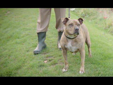 Transformers: El último caballero - Freya the Dog Featurette?>