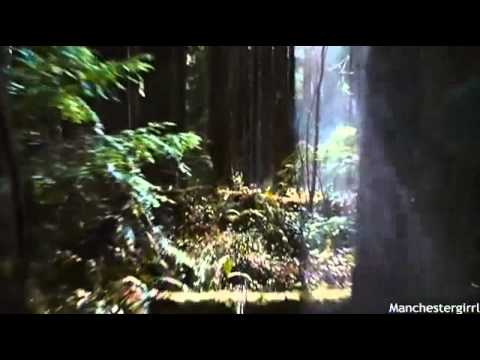 Breaking Dawn Part Two   Bella's First Hunt   YouTube 360p