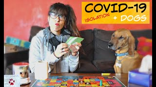 Social distancing with dogs (and cats) | COVID-19 special by The Orphan Pet