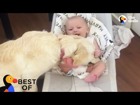 Funny animals - Animals that Will Make You Laugh, Cry and Say Aww: Funny Animal Videos 2018  Best of The Dodo