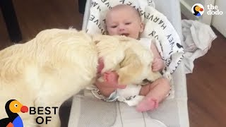 Best Animal Videos that Will Make You Laugh, Cry and Say Aww | Best of The Dodo by The Dodo