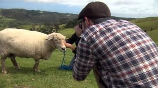 Jonkers Farm leads in this week's Country Calendar