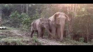Mother and baby elephant were separated for three years before being reunited. »»» Subscribe to CBC News to watch more videos: https://www.youtube.com/user/c...