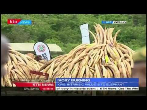 Kenya set to burn 505 tones of Ivory, KTN's Denis Onsarigo with the update