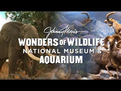 Johnny Morris' Wonders of Wildlife in Springfield Missouri
