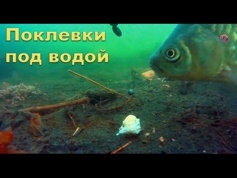 видео рыбалка на удочку с поплавком на озере