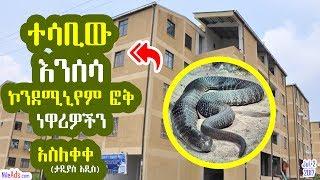 Ethiopia: ተሳቢው እንሰሳ (እባብ) ኮንደሚኒየም ፎቅ ነዋሪዎችን አስለቀቀ - Sneak in A.A Condo Buildings