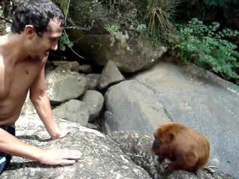 Rolé nas cachoeiras de Socorro - SP / Macaco Bugio deixou fazer carinho.