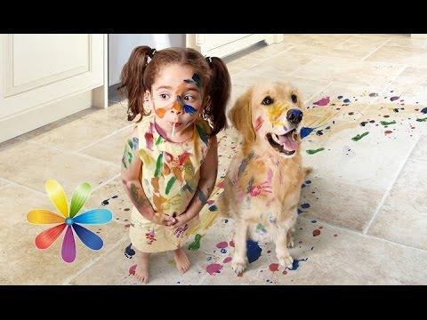 Топ-5 собак для ребенка - Все буде добре - Выпуск 407 - 11.06.2014 - Все будет хорошо