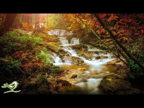 Beautiful Relaxing Music - Peaceful Harp & Flute Music with Birds Singing