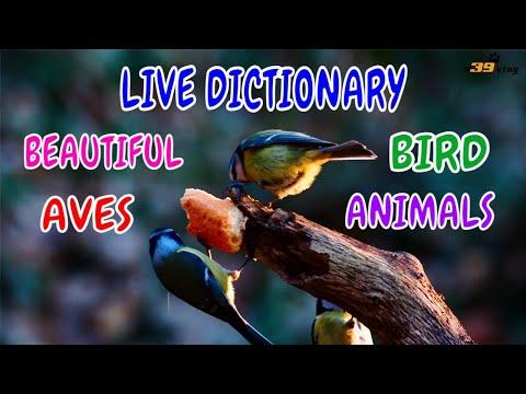 Con Chim - Live Dictionary